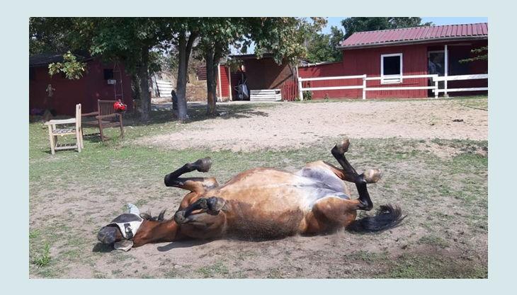 iris brosen pferd auf dem rücken liegend