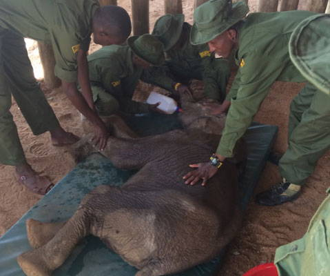 $50 covers the cost of a tank of fuel for the Reteti elephant rescue trucks.  Donate $50