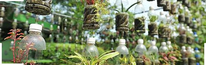 A vertical garden using a plastic bottle