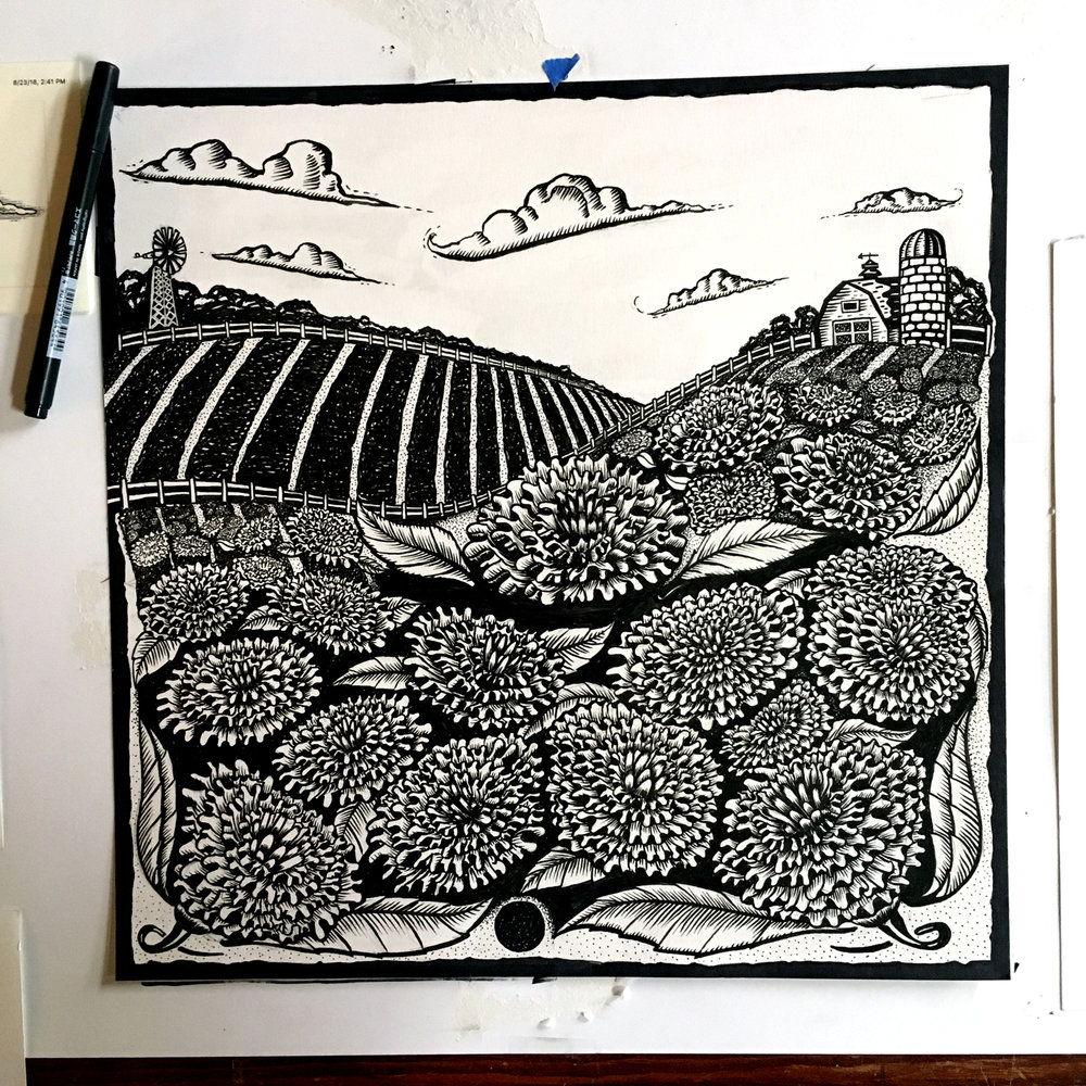 LL_MarigoldB_Illustration_1600px.jpg