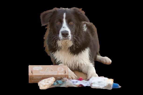 Biologisch abbaubare Hundekotbeutel von PooPick für Deinen Hund