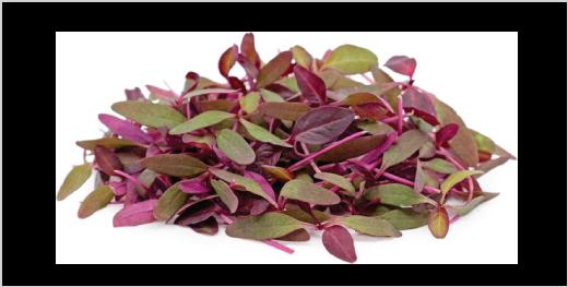 Red Amaranthus Microgreens