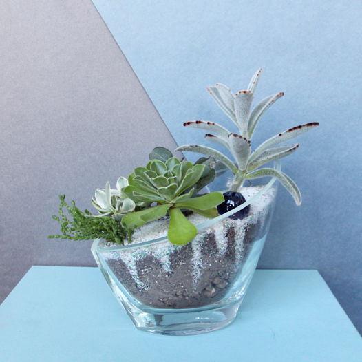 Композиция с живыми растениями