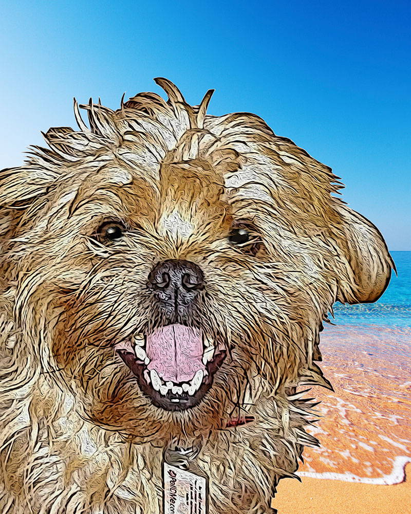 dog portrait - beach
