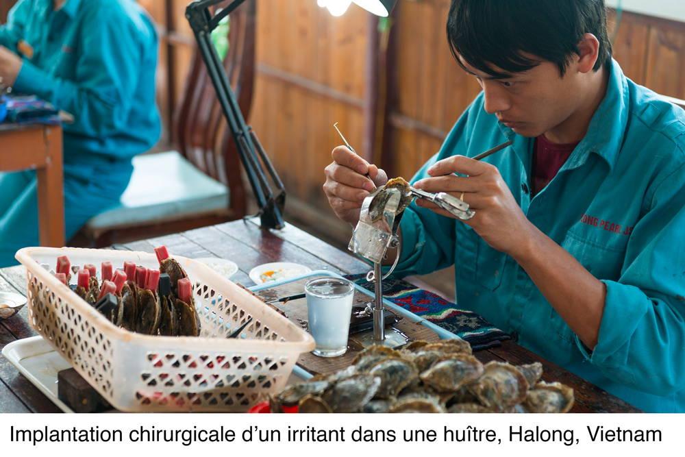 Un employé d'une compagnie de culture procède à l'implantation d'un irritant dans une huître perlière