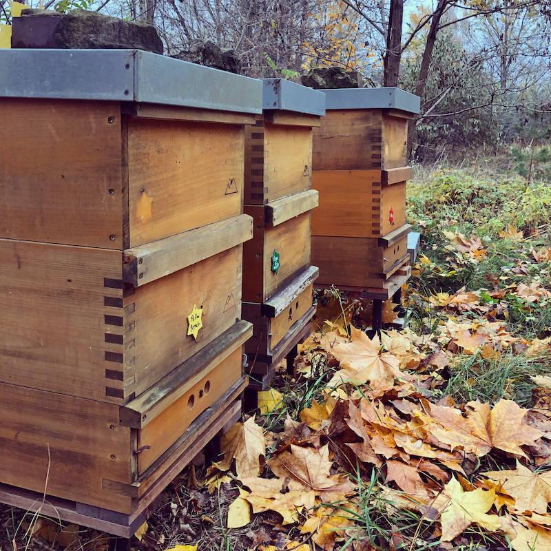 Bienenvölker der Bio-Imkerei Fließgold mit Herbstlaub
