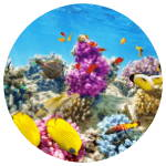 coral reef growth