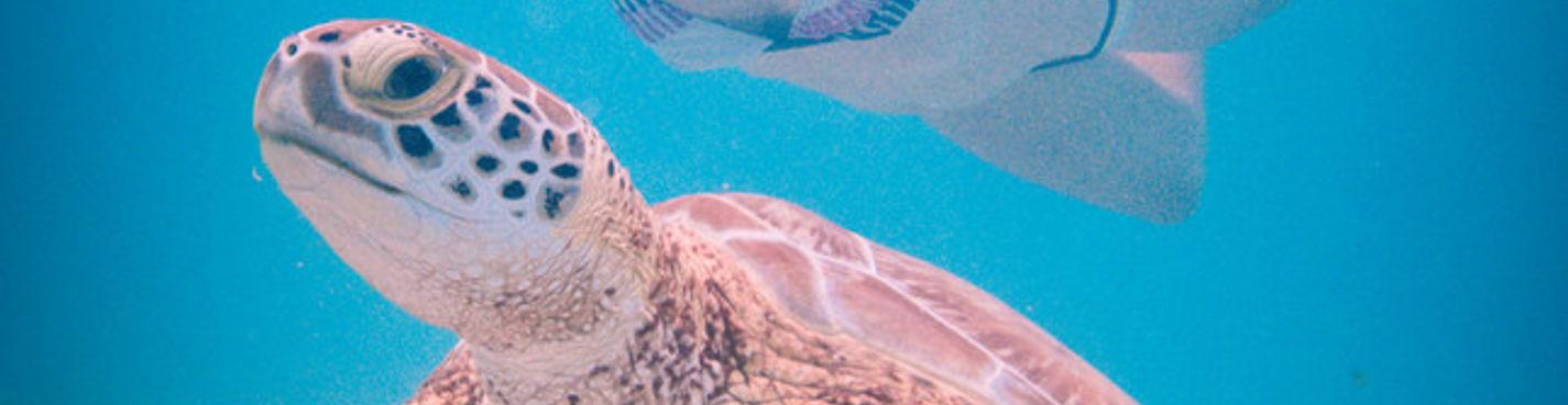 Лучшее на Ривьере Майя (купание с черепахами, купание в сеноте, райский пляж, Тулум)
