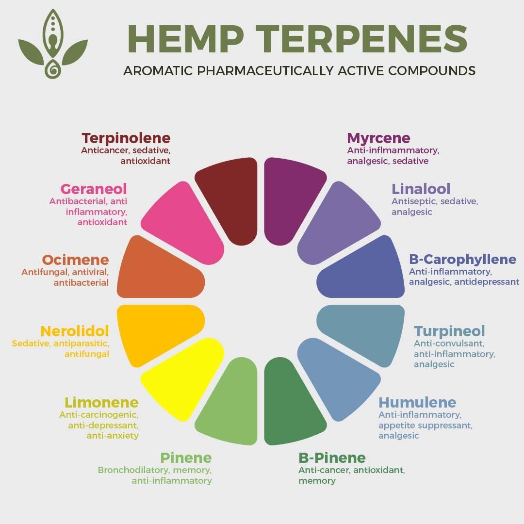 whole plant hemp