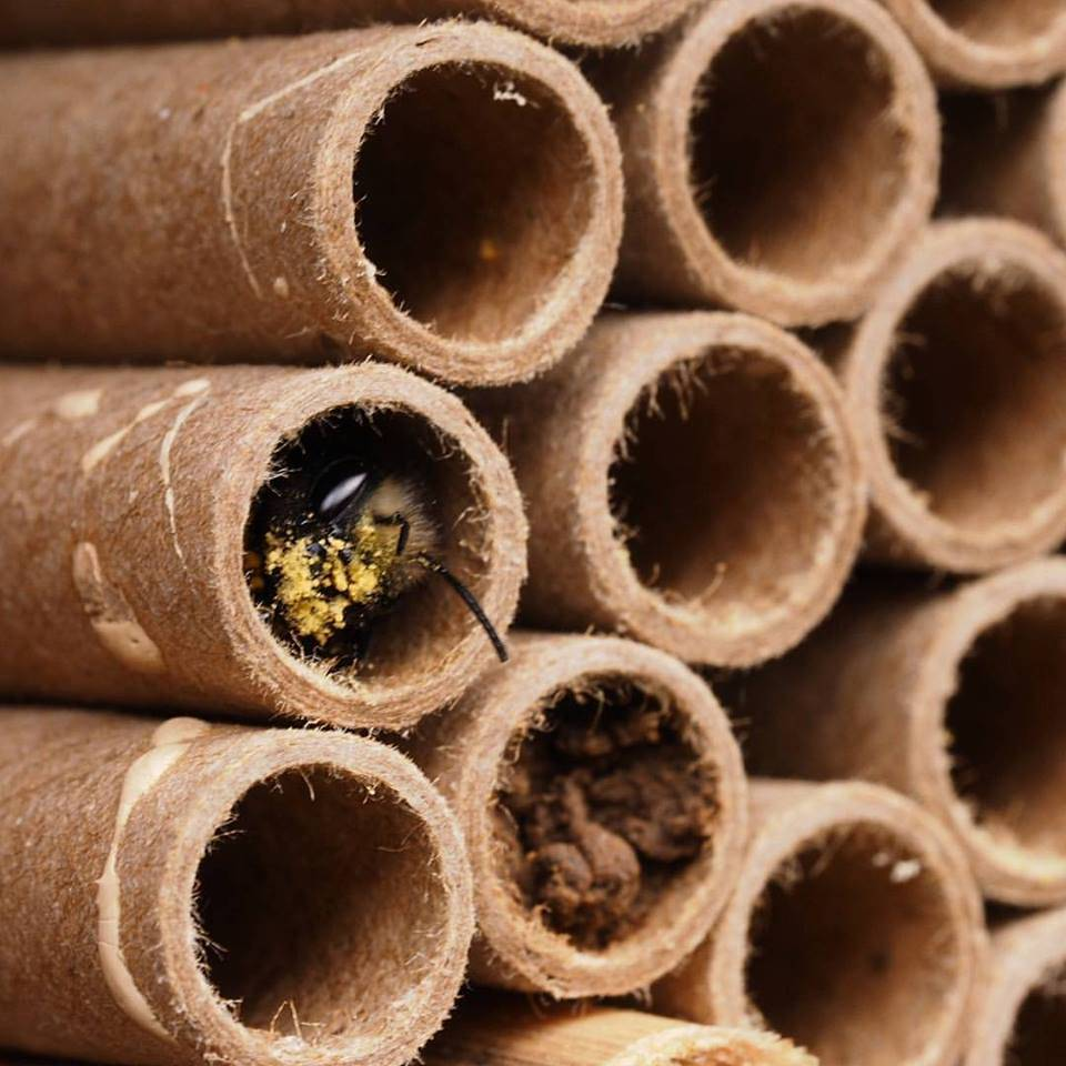 Groovy Mason Bees Home Interior And Landscaping Sapresignezvosmurscom