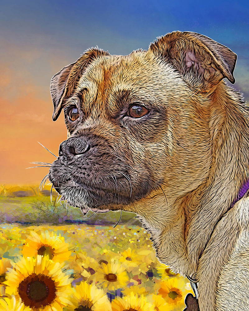 dog portrait - sunflower