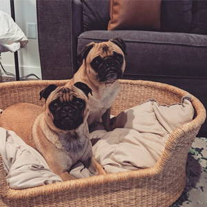 rattan dog bed basket