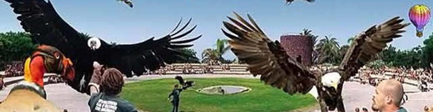 Твин Тикет —  Джунгли Парк + Аквапарк