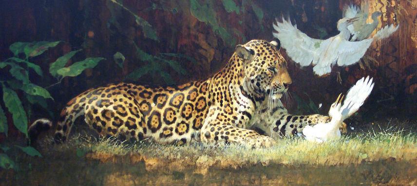 Jaguar and Cattle Egrets