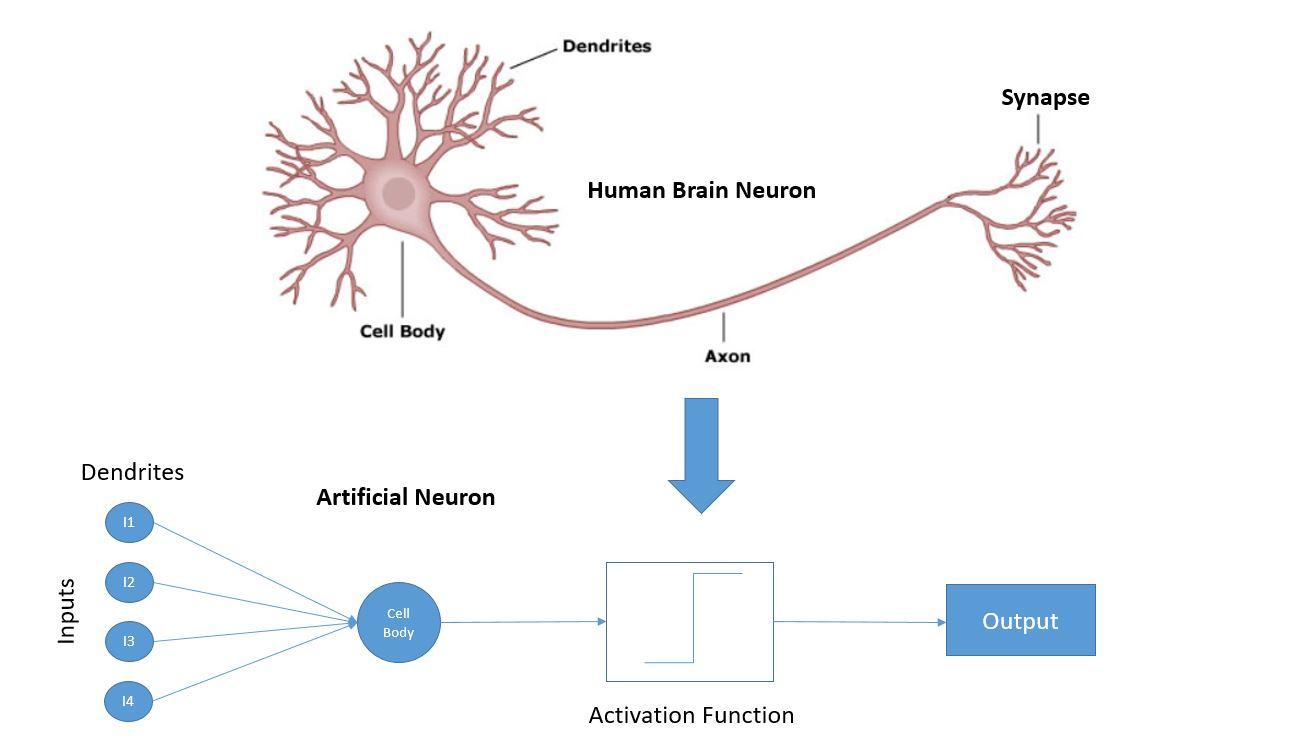 a neuron.JPG