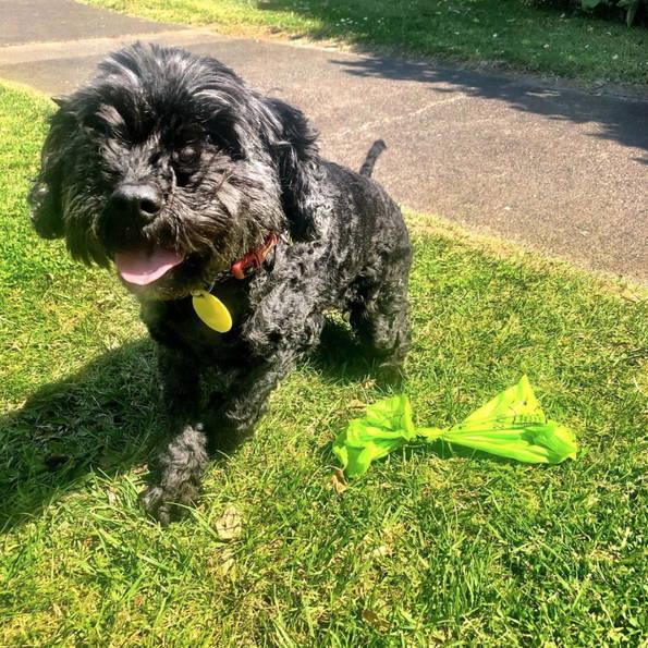 Dog poop bags: compostable eco friendly plastic free big dick