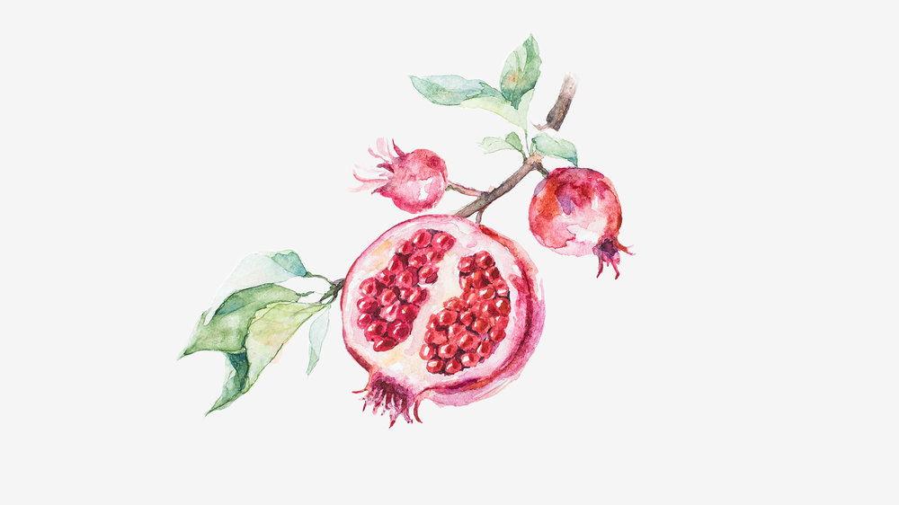 water_color_fruit-01.jpg