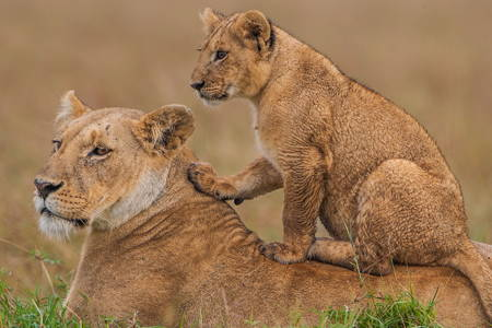 10 Days Kenya Private Luxury Wildlife Safari