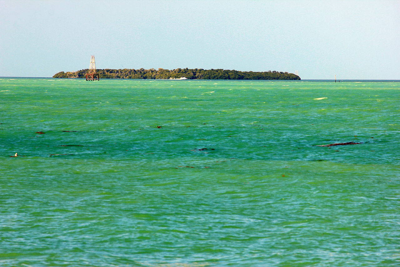 Florida Keys Spearfishing