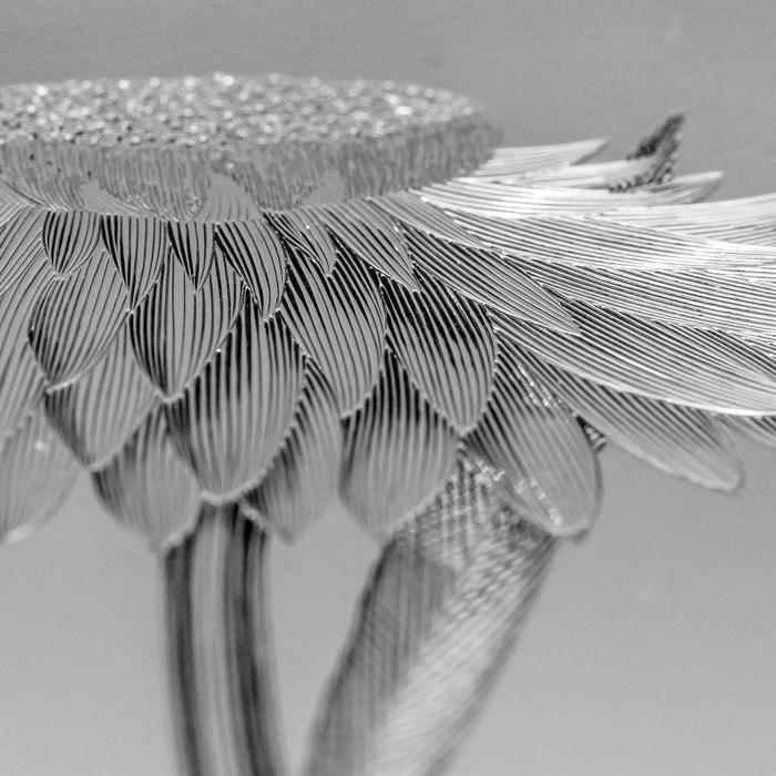 AHE Banks' Florilegium plate detail