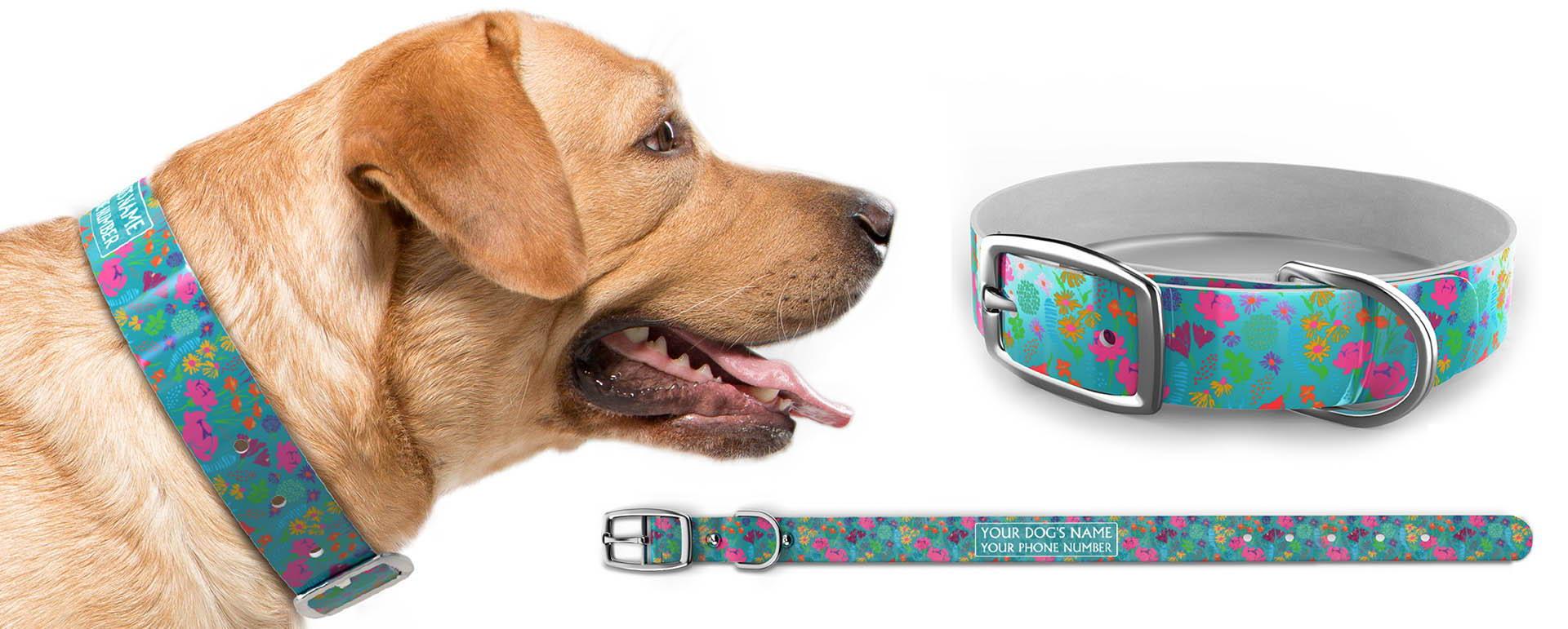 Americas favorite dog collar c4
