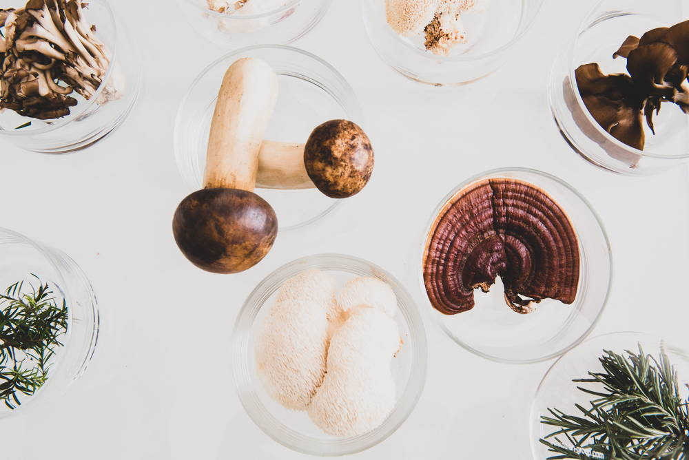 Medicinal mushrooms in glass bowls on table