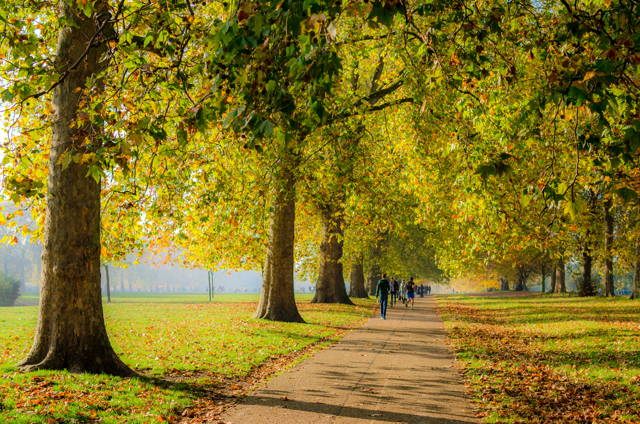 Explore Hyde Park to Notting Hill