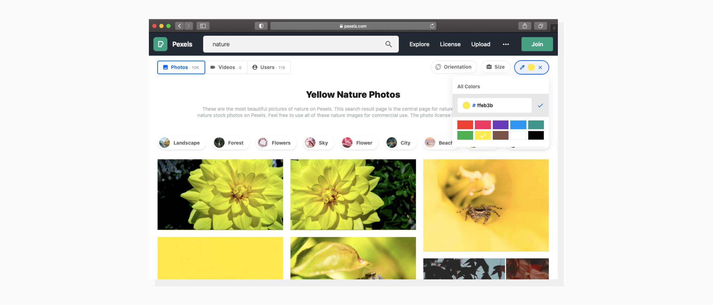 yellow nature photos