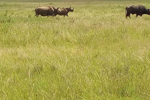 3-Day Predator adventures at Masai Mara