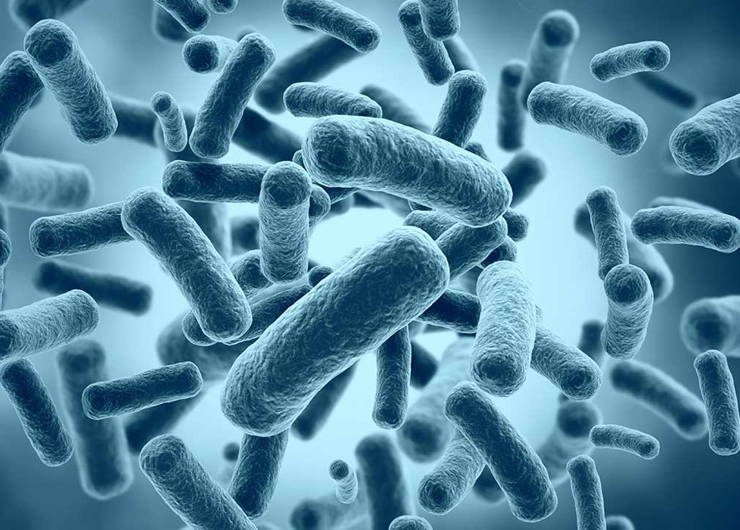 Stock image of microbes under a high zoom microscope.