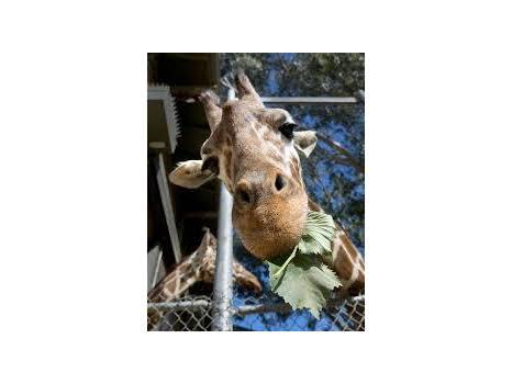 Sacramento Zoo for 4