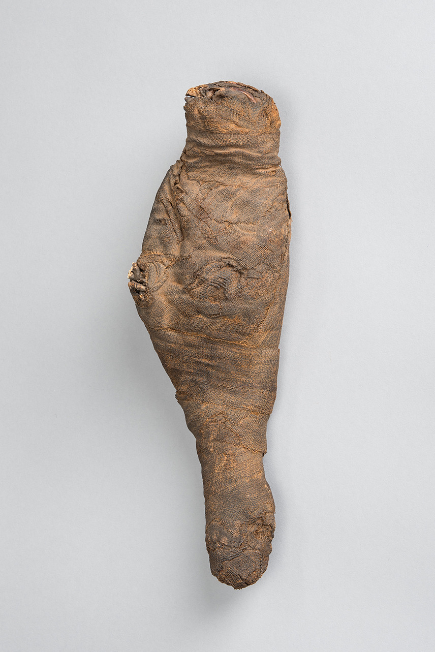 Falcon Mummy, front