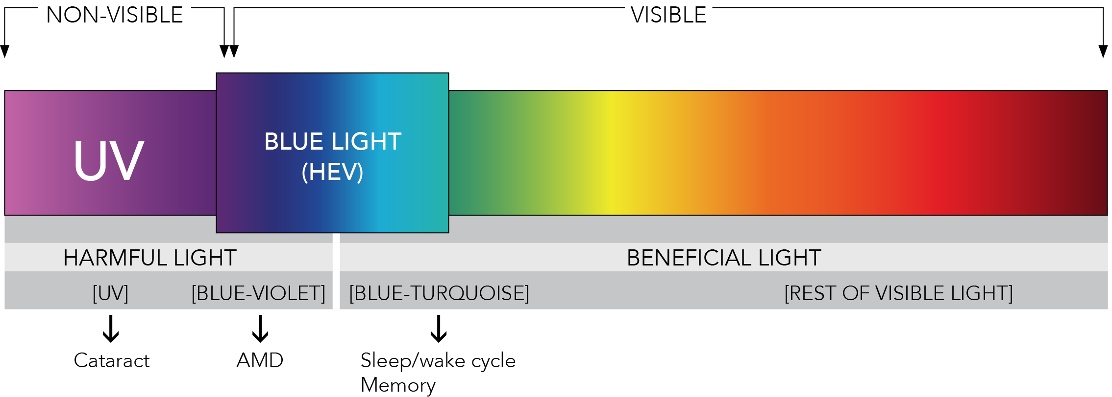 the light spectrum