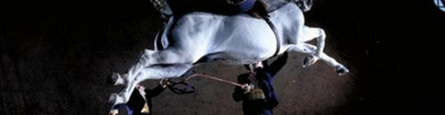 Индивидуальная экскурсия в Херез (шоу лошадей и винные погреба) с Коста дель Соль