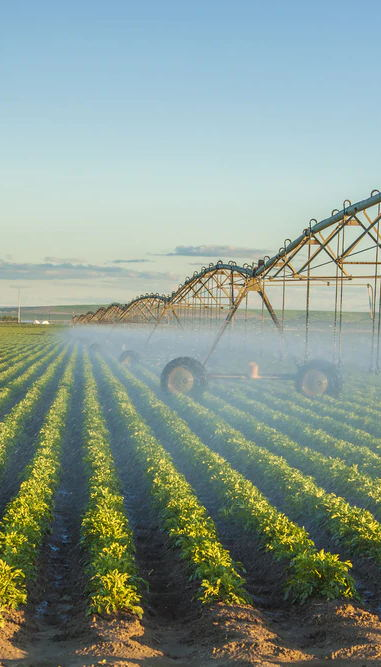 Potato field being irrigated