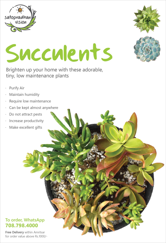 Succulents Fact Sheet