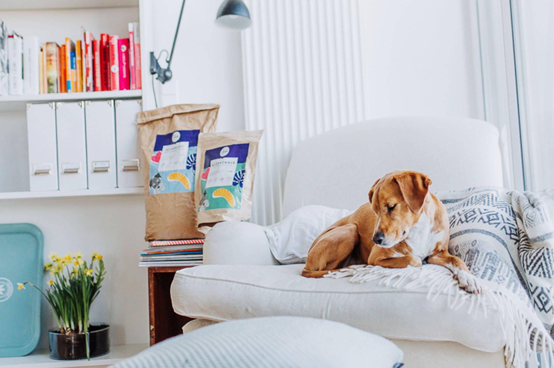 Allergiker Hund im Wohnzimmer