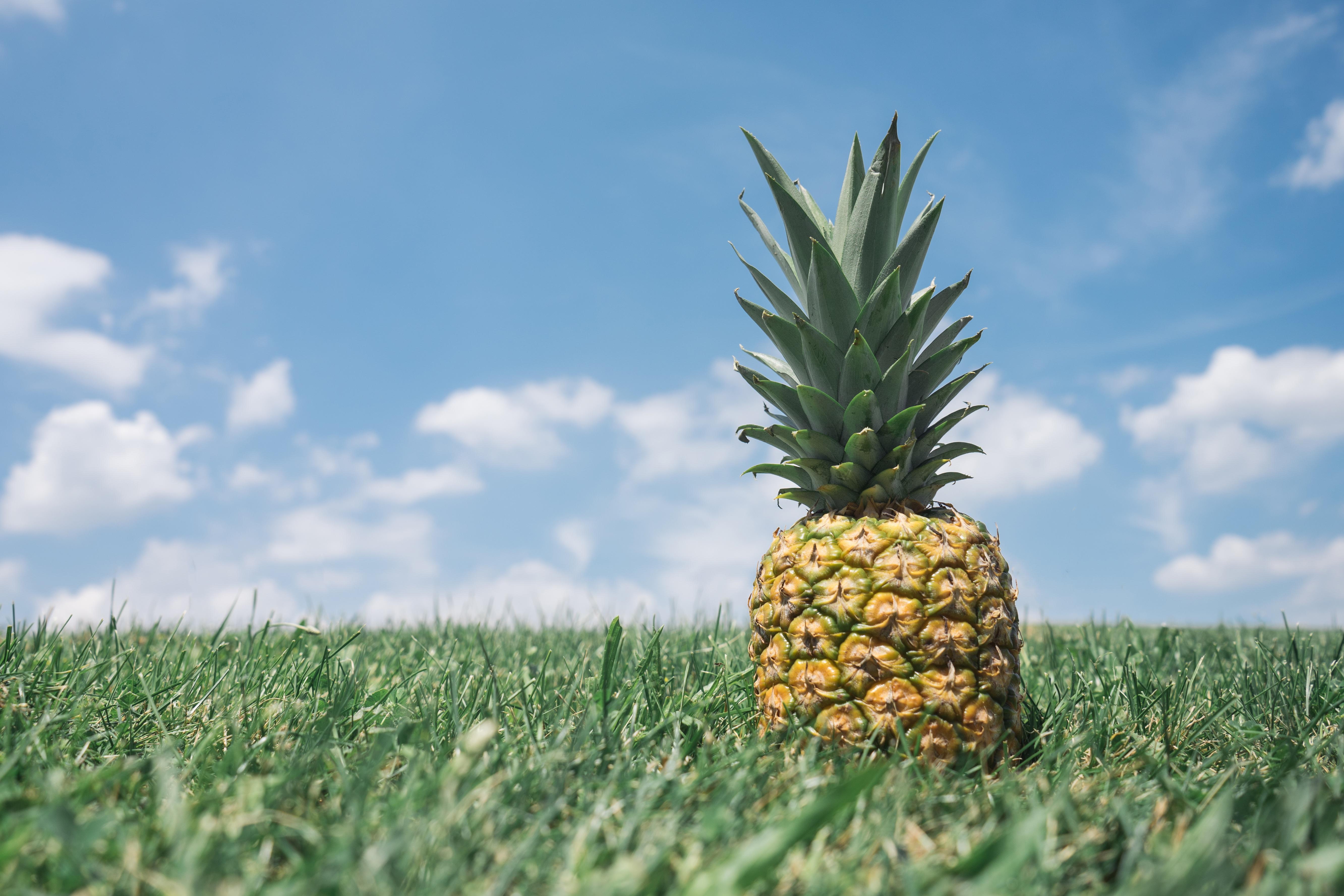 A pineapple in a field