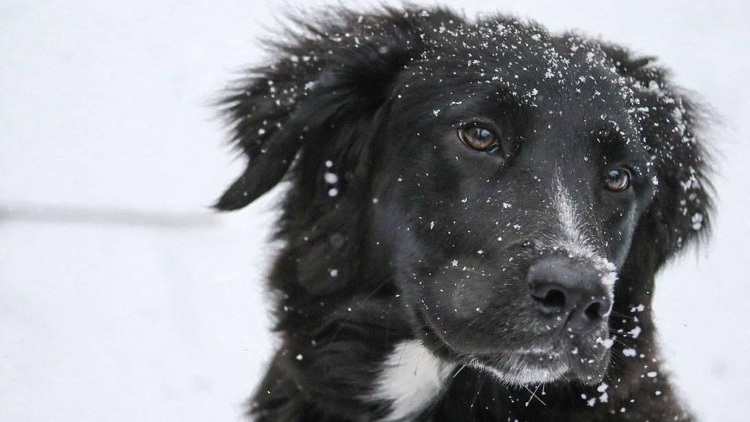 Die kalte Jahreszeit bringt auch Hunden eine Erkältung