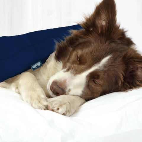 Calming Pets weighted blankets can help dogs sleep better
