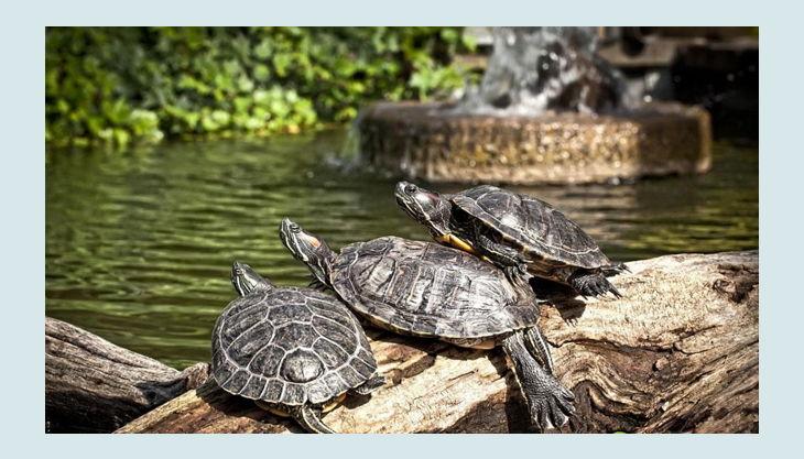 rolfs streichelzoo schildkröten