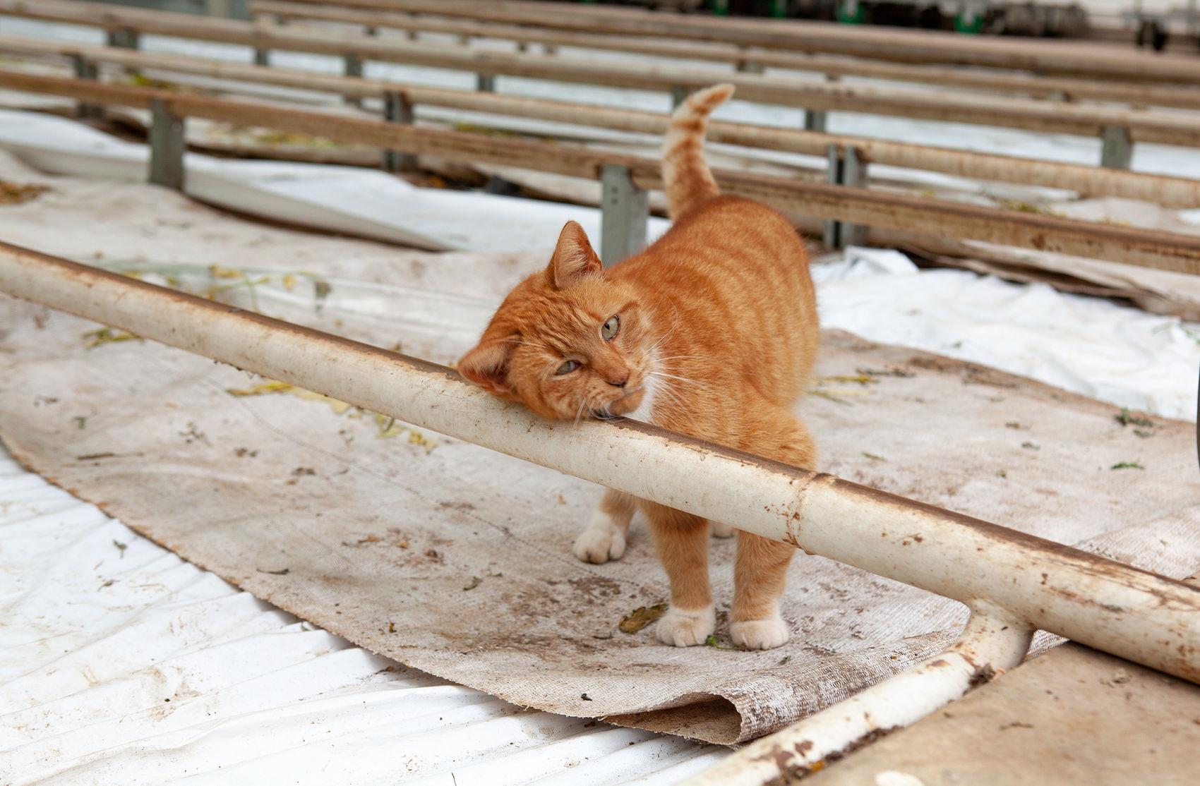 Foto van poes Kitty die de aardwarmte in de kas van Paul zeer kan waarderen.