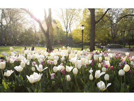 Donate $150: See Prospect Park Bloom