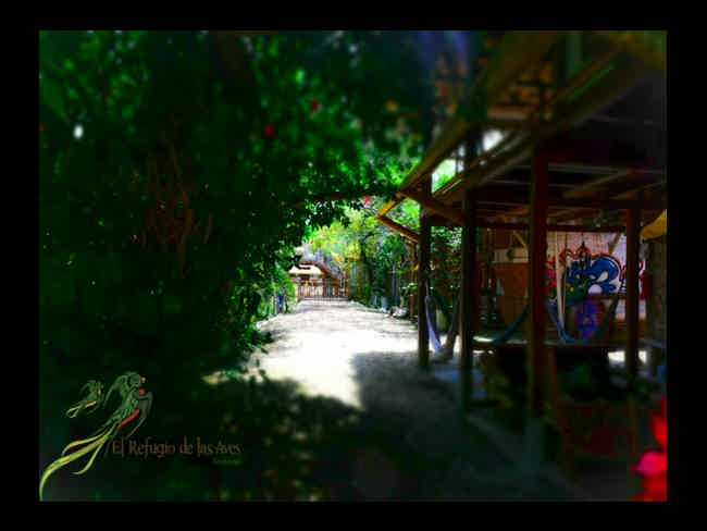 The refuge of birds ... and yours too !!-Montañita