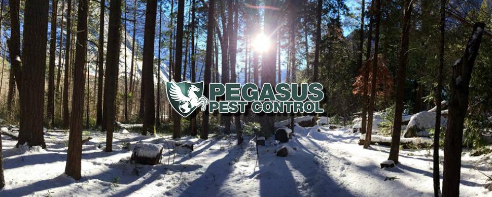 Pegasus Pest Control Sacramento