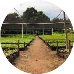Nursery Eden Reforestation Projects