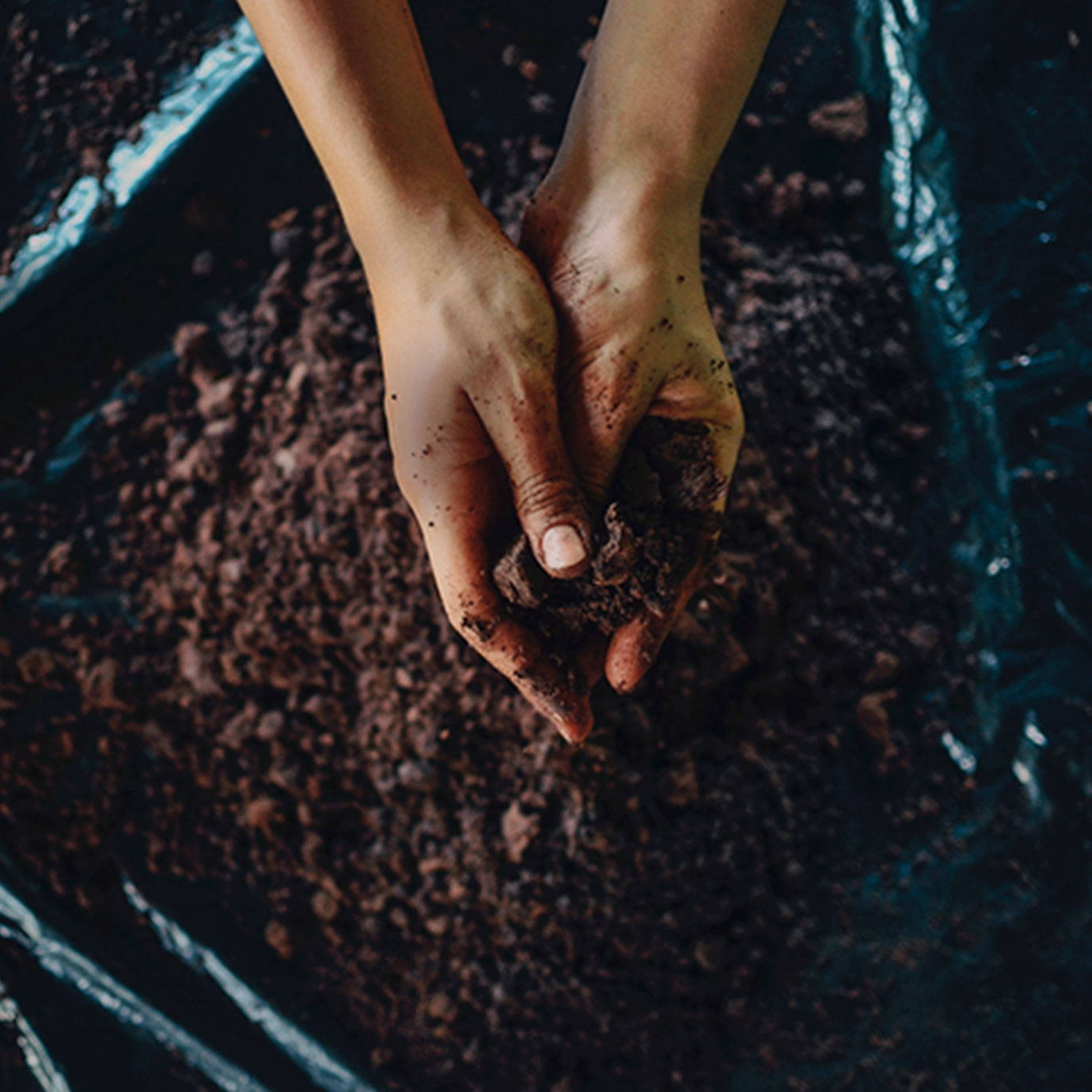 Ground up cacao and hands image