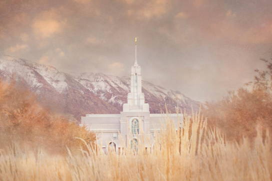 Mount Timpanogos Temple from across a wheat field.