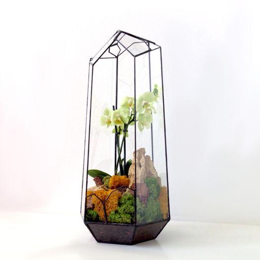 Флорариум Izzy Orchiwright с орхидеей Фаленопсис