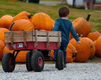 Kelsay Farms fall festivities
